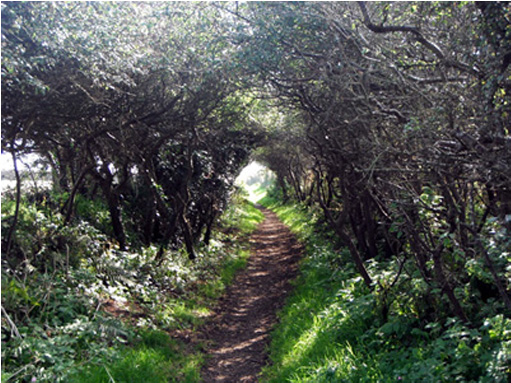 Hawthorn Tunnel