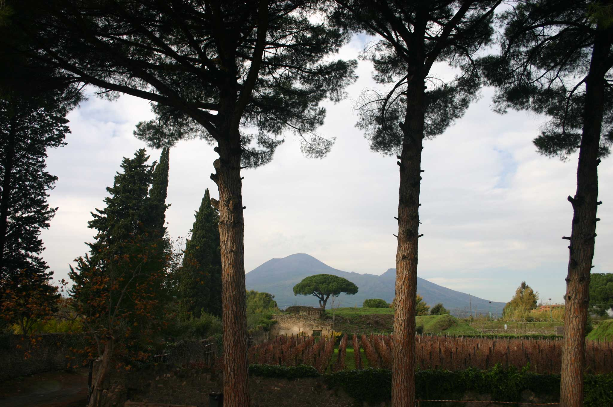 Pompeii - Vesuvius through the trees - © William Mackesy