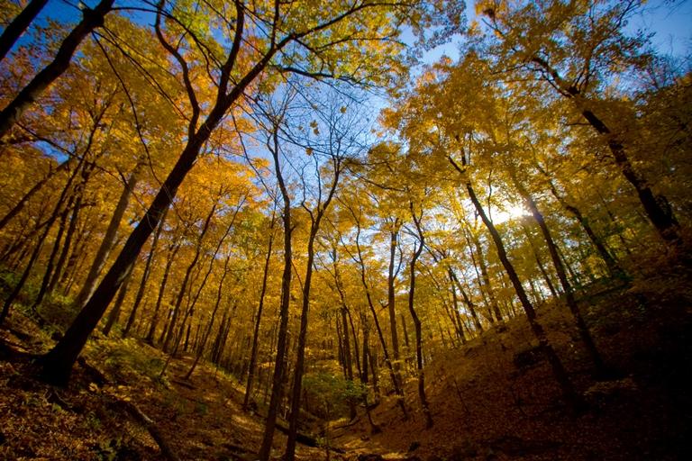 USA Mid-west, Matthiessen State Park, Matthiessen State Park, Walkopedia
