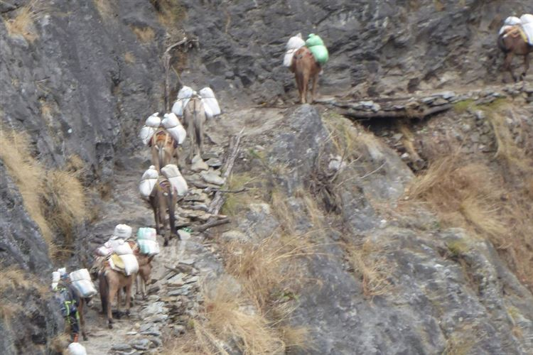 Manaslu Circuit: Mules on route from Arket Bazaar to Soti Khola - © Dick Everard