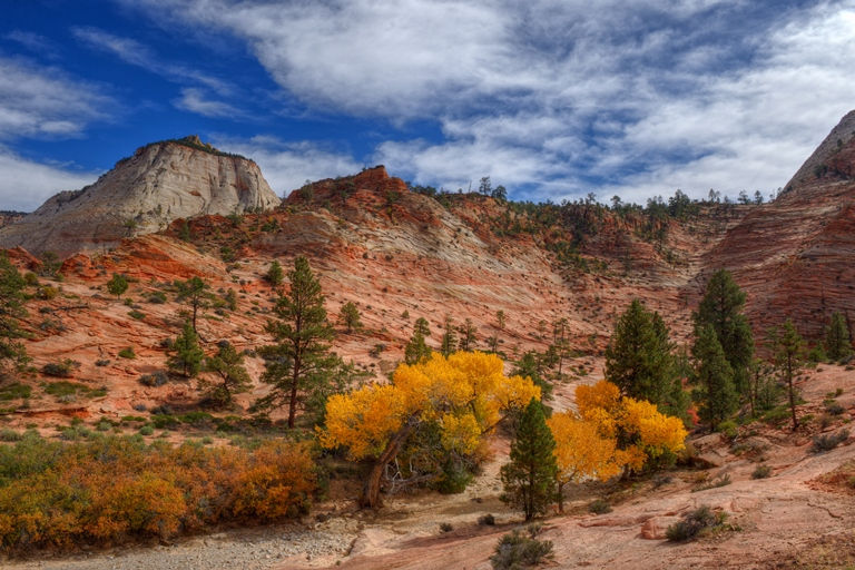 Fall Colors in Zion National Park, Utah - © Diana Robinson...