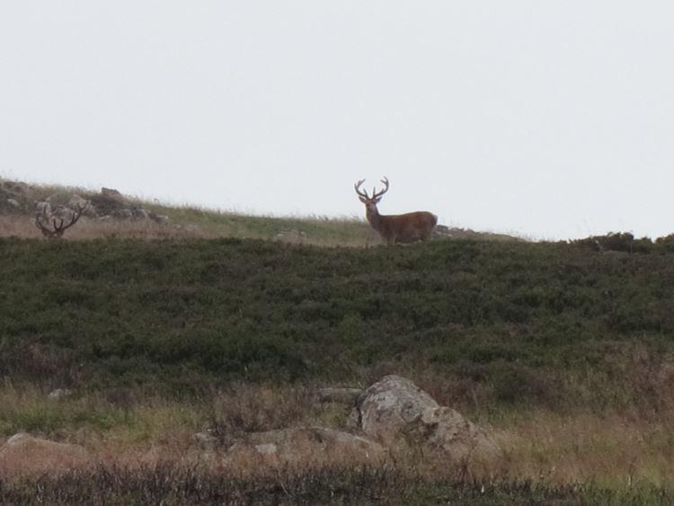 Lochnagar and Loch Muick: Deer above Loch Muick - © William Mackesy