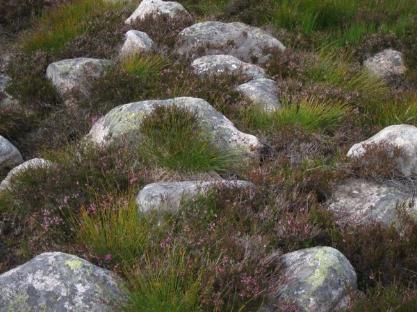 Grass, rock, heather in hanging valley - © William Mackesy