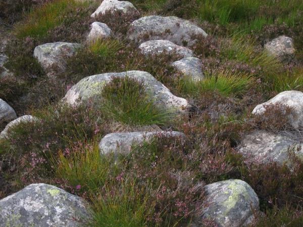 Lochnagar and Loch Muick: Grass, rock, heather in hanging valley - © William Mackesy