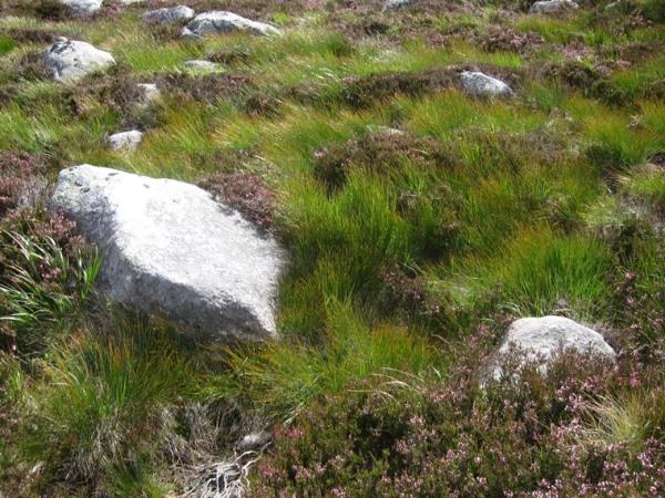 Lochnagar and Loch Muick: Grass, rock, heather in hanging valley 3 - © William Mackesy