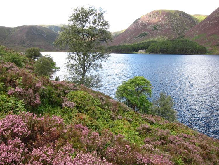 Lochnagar and Loch Muick: Summer 2013 - best heather ever? - © William Mackesy