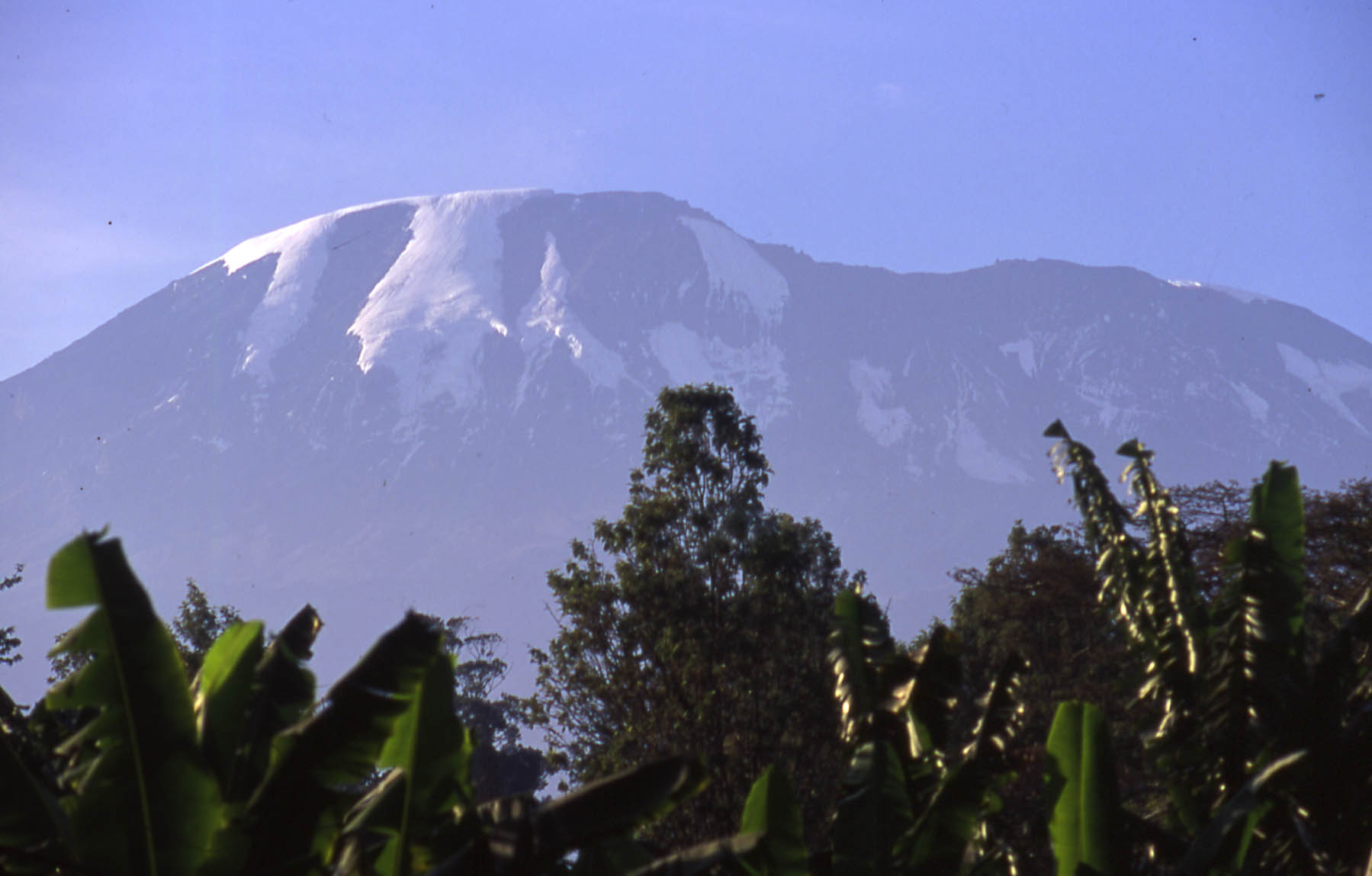 Climbing Kilimanjaro Summit: Kili as Earth Mother - her flanks support rain and cloud forest to 9,500ft - © Arabella Cecil