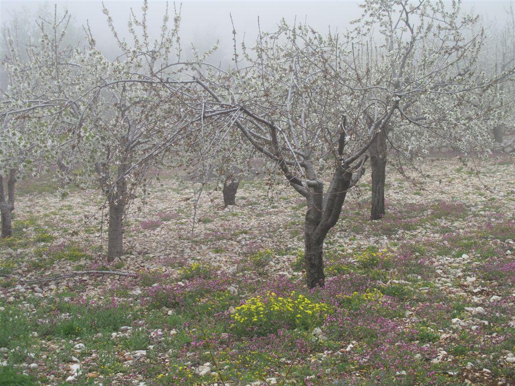 Spring time - Bchennata - Mount Lebanon - © ImadM