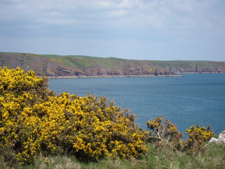 Pembrokeshire Coast Path: East towards Freshwater East - © William Mackesy
