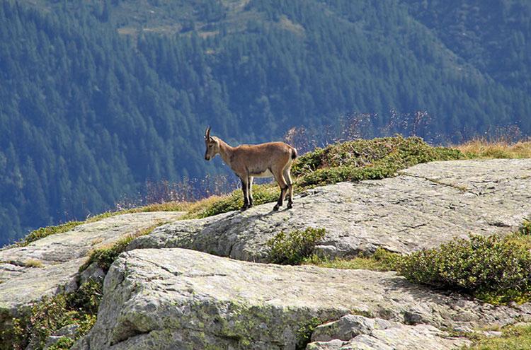 Aiguilles Rouges: Chamonix - © Flickr user Giam