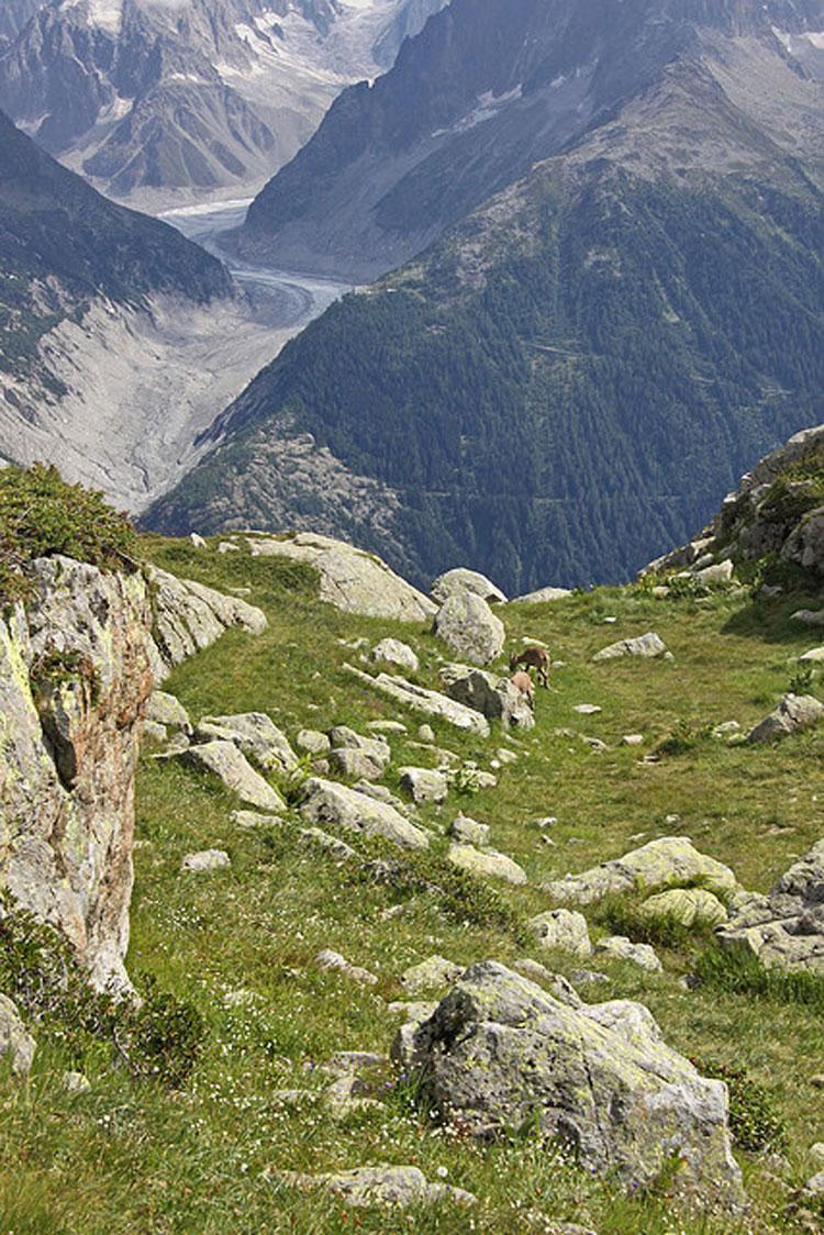 Aiguilles Rouges: La Reserve de Aiguilles Rouge - © Flickr user Giam