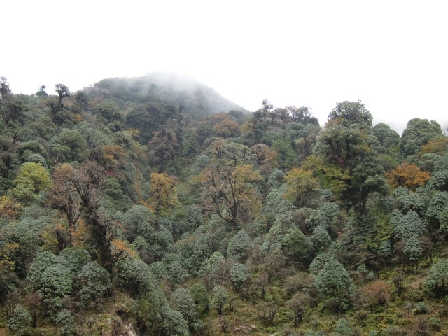 India Sikkim and nearby, Singalila Ridge, Mixed forest, Walkopedia