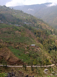 India Sikkim and nearby, Singalila Ridge, Darjeeling hills, Walkopedia