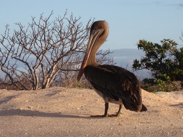 Ecuador Galapagos Islands, Galapagos Islands, , Walkopedia