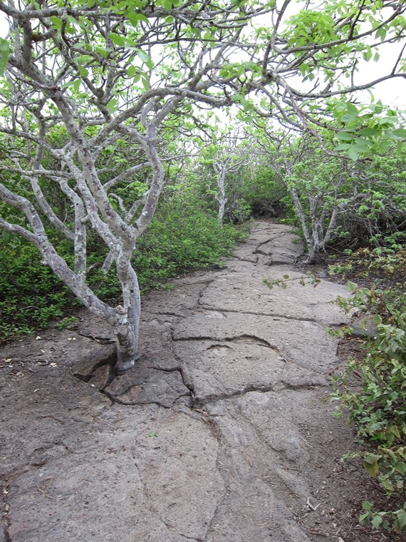 Ecuador Galapagos Islands, Galapagos Islands, Lava pavement, Genovesa, Walkopedia