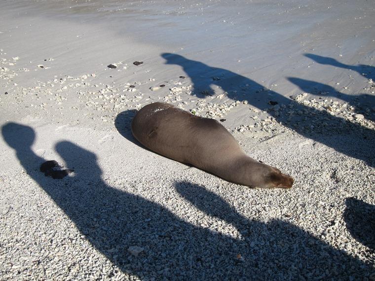 Ecuador Galapagos Islands, Galapagos Islands, Sea Lion and admirers, Genovesa, Walkopedia