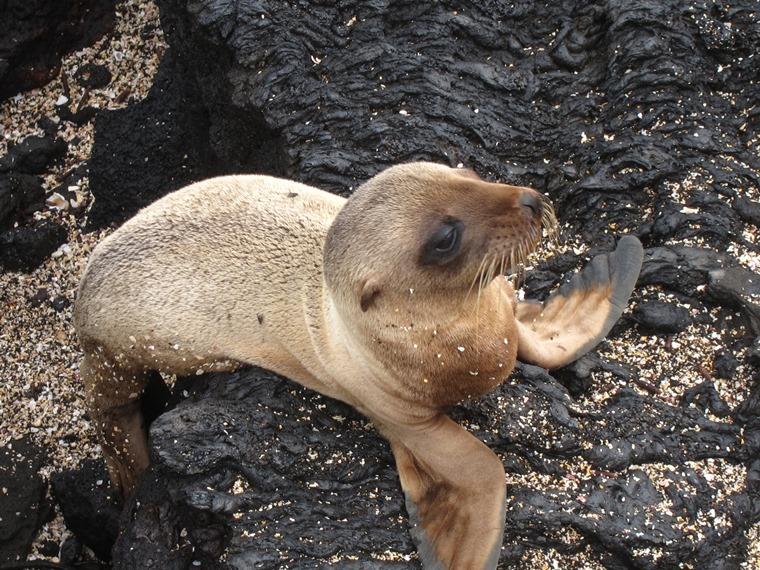 Ecuador Galapagos Islands, Galapagos Islands, Puerto Egas, San Salvador, Walkopedia
