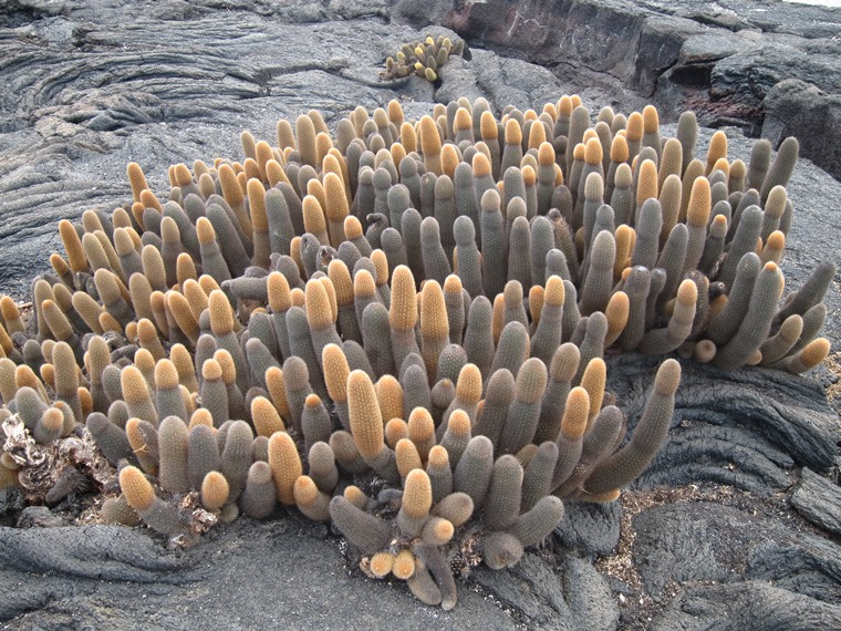 Ecuador Galapagos Islands, Galapagos Islands, Punta Espinoza, Fermandina, Walkopedia