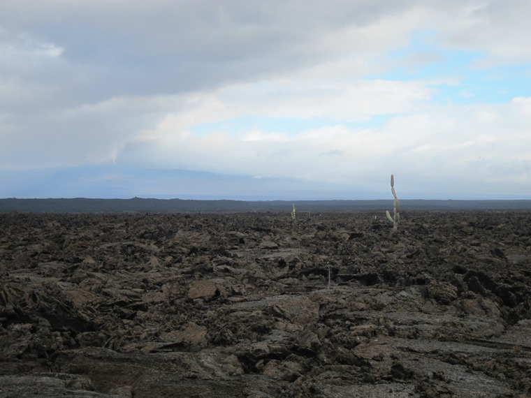 Lava field, Punta Moreno, Isabela - © William Mackesy