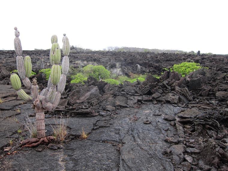 Ecuador Galapagos Islands, Galapagos Islands, Lava field, Punta Moreno, Isabela, Walkopedia