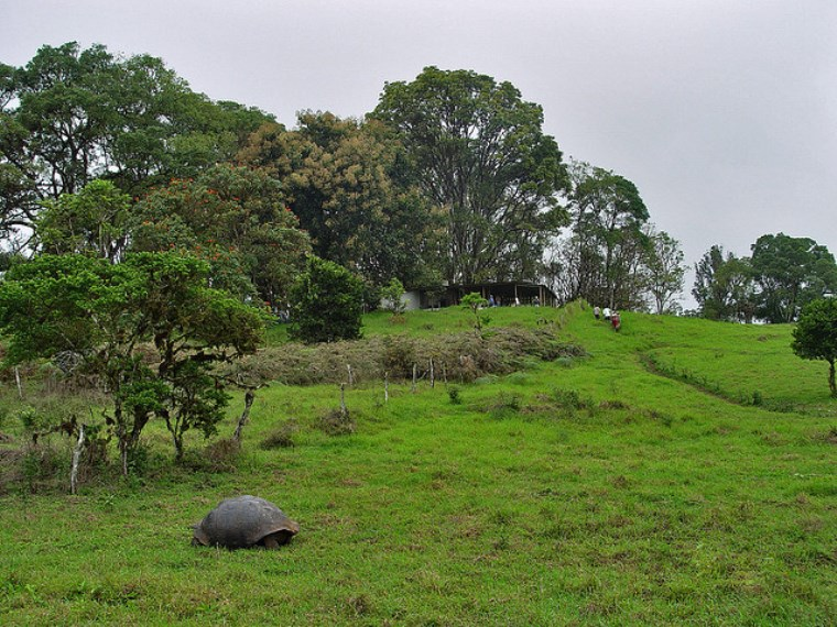 Giant tortoise on Santa Cruz - © Flickr User - godutchbaby