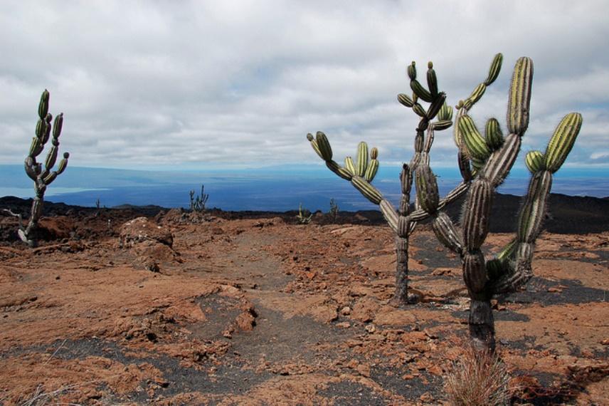 Ecuador Galapagos Islands, Galapagos Islands, Hiking Sierra Negra volcano, Walkopedia