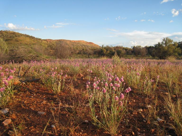 Australia Northern Territory, West Macdonnell Ranges, , Walkopedia