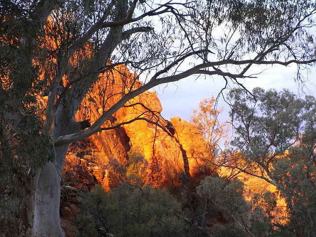 Larapinta - © flickr user andydolman