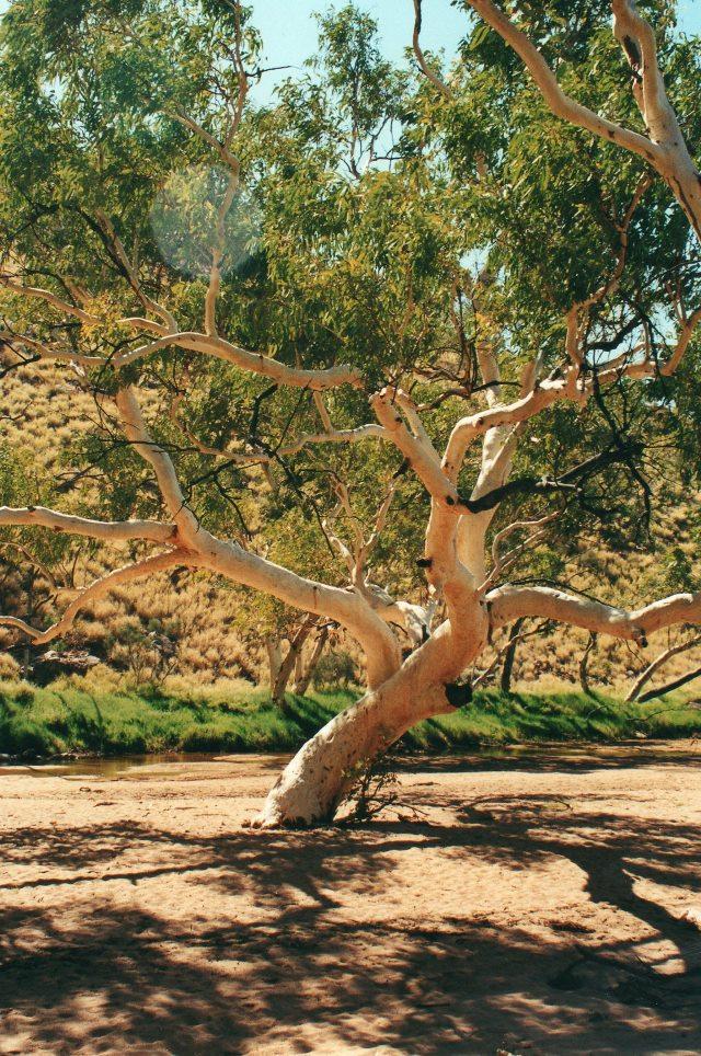 Australia Northern Territory, West Macdonnell Ranges, Near Standley Chasm, Walkopedia