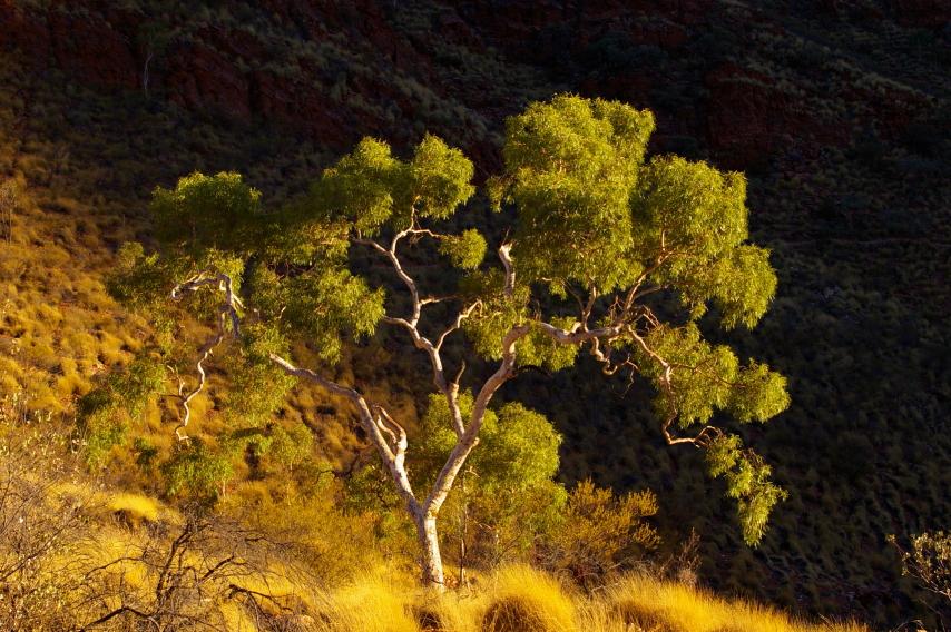 Australia Northern Territory, Ormiston Gorge and Pound, , Walkopedia