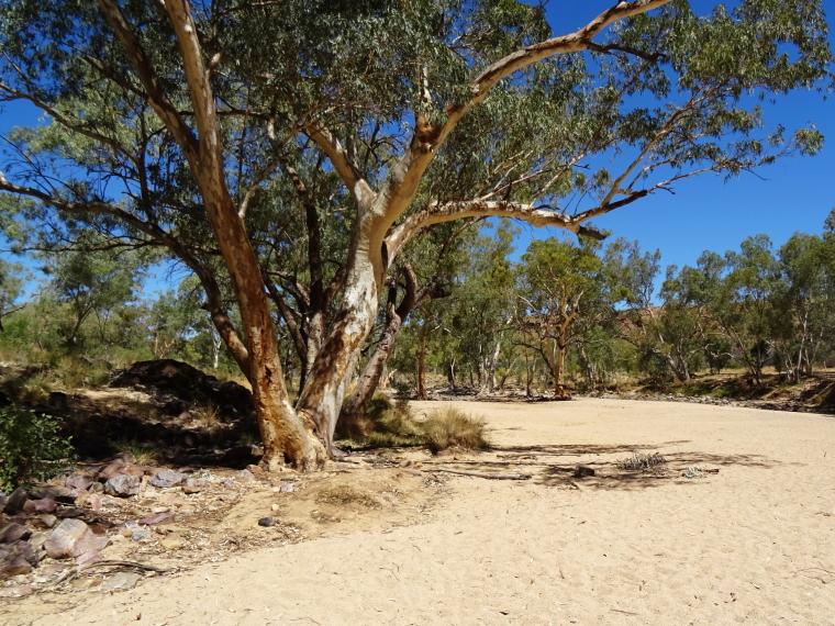 Australia Northern Territory, Ormiston Gorge and Pound, Ormiston Gorge, Walkopedia