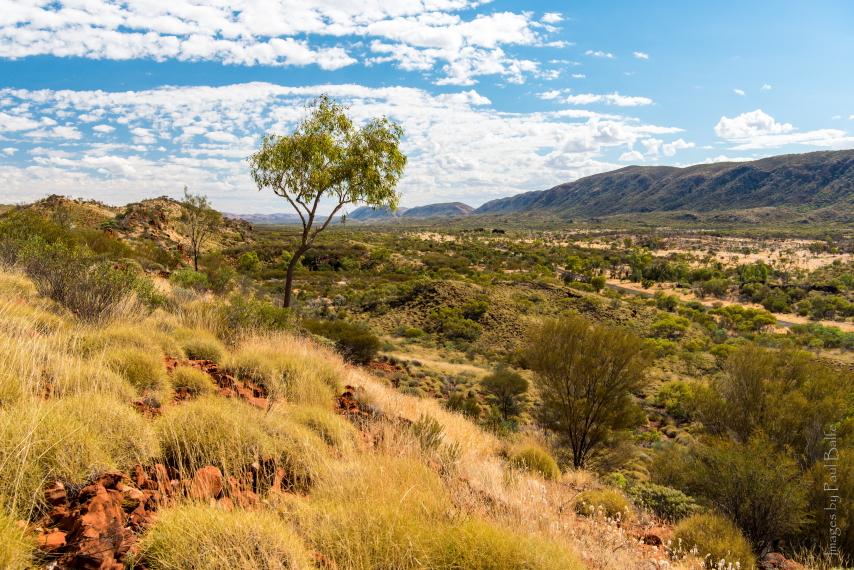 Australia Northern Territory, Ormiston Gorge and Pound, Western MacDonnell Ranges, Walkopedia