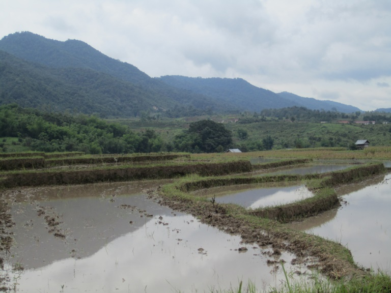 Rice Paddies in Northern Laos - © flickr user- Stephen Bugno