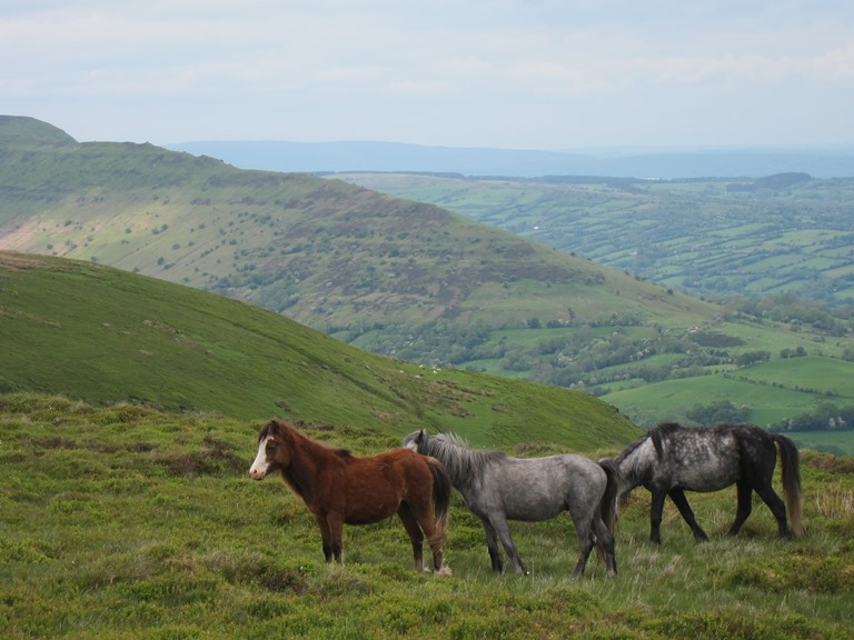 Offa's Dyke Path: North along Hatterall Ridge - © William Mackesy