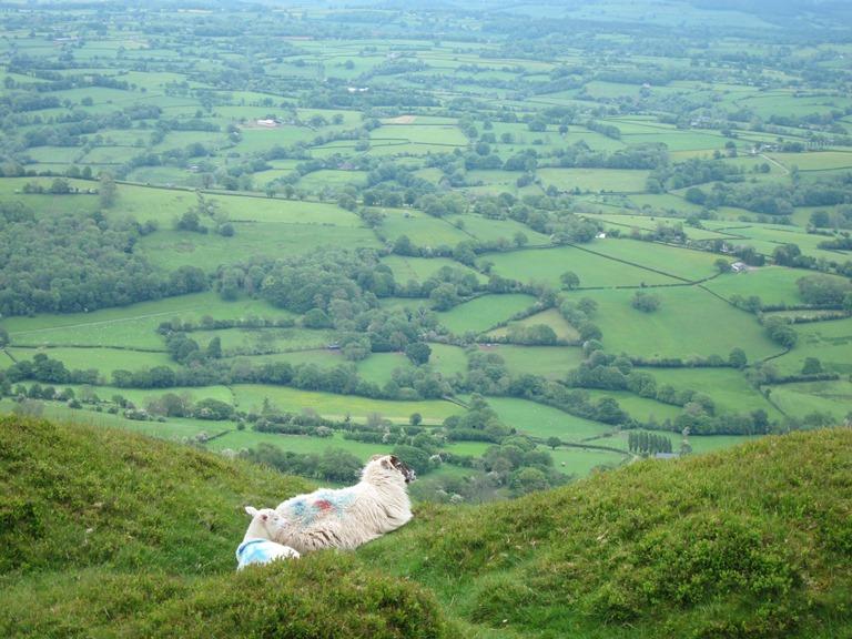Offa's Dyke Path: From Hatterall Ridge - © William Mackesy