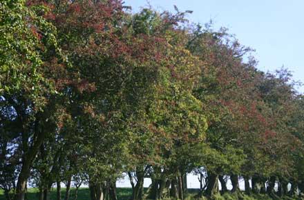 """Offa's Dyke Path: Offa""""s Dyke - Autumn berries - © William Mackesy"""