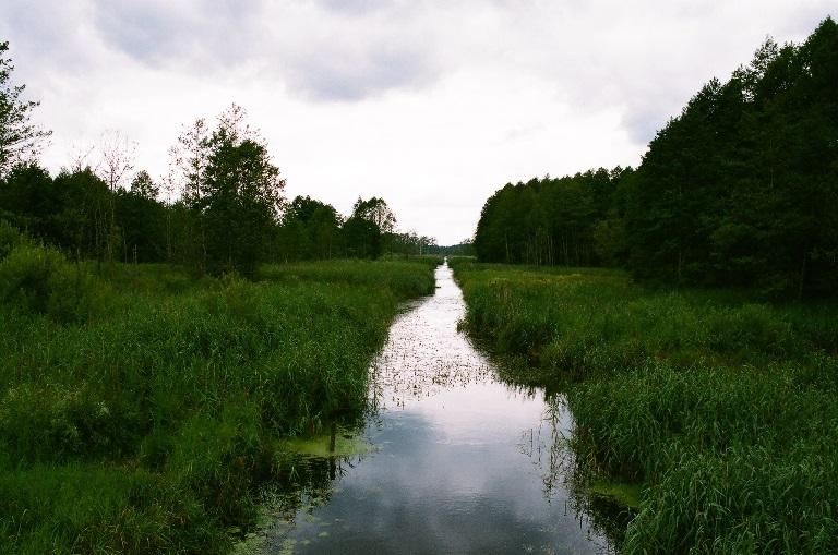 Bialowieska Forest  - © Marcin Ejsmont