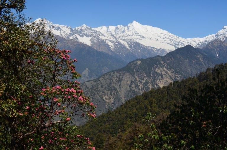 India NW: Uttarakhand/Kumaon, Pindari Glacier Trek, , Walkopedia