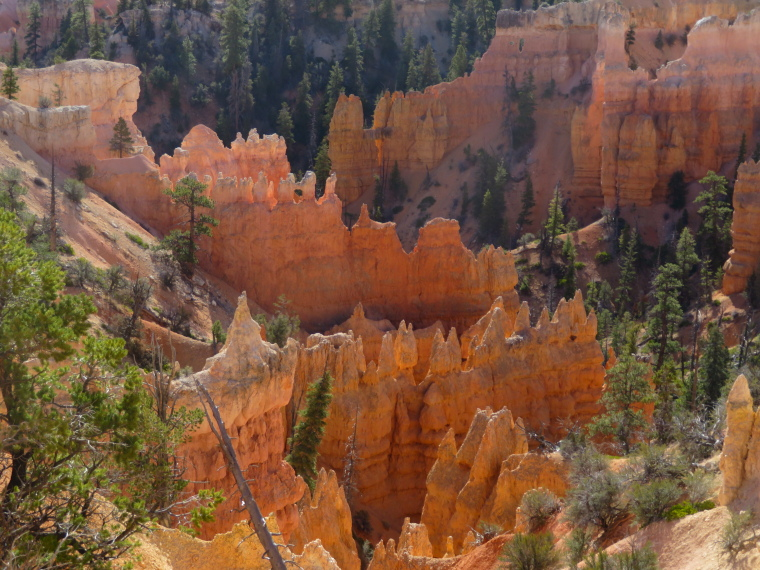 Intense hoodoos, Fairyland Loop - © William Mackesy
