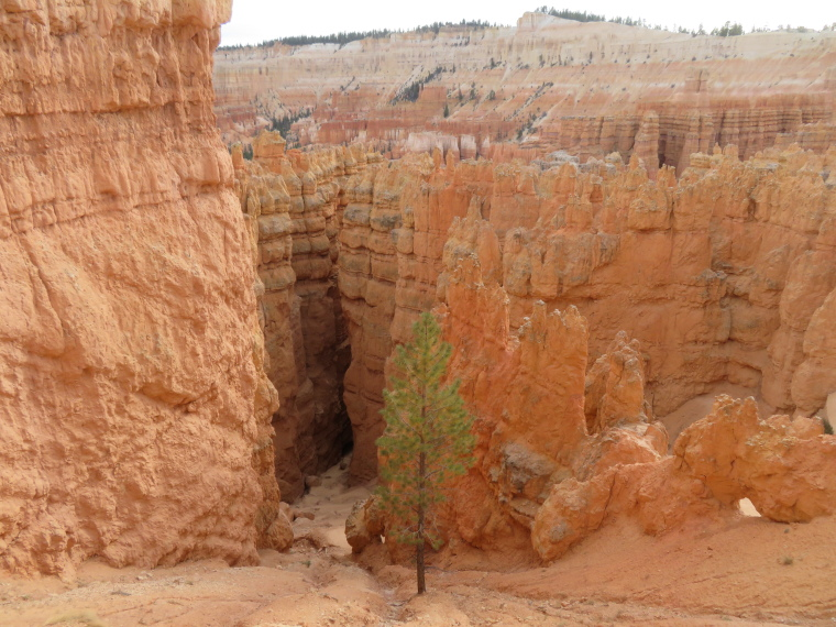 Bryce Canyon: Down into Wall St from just below the rim