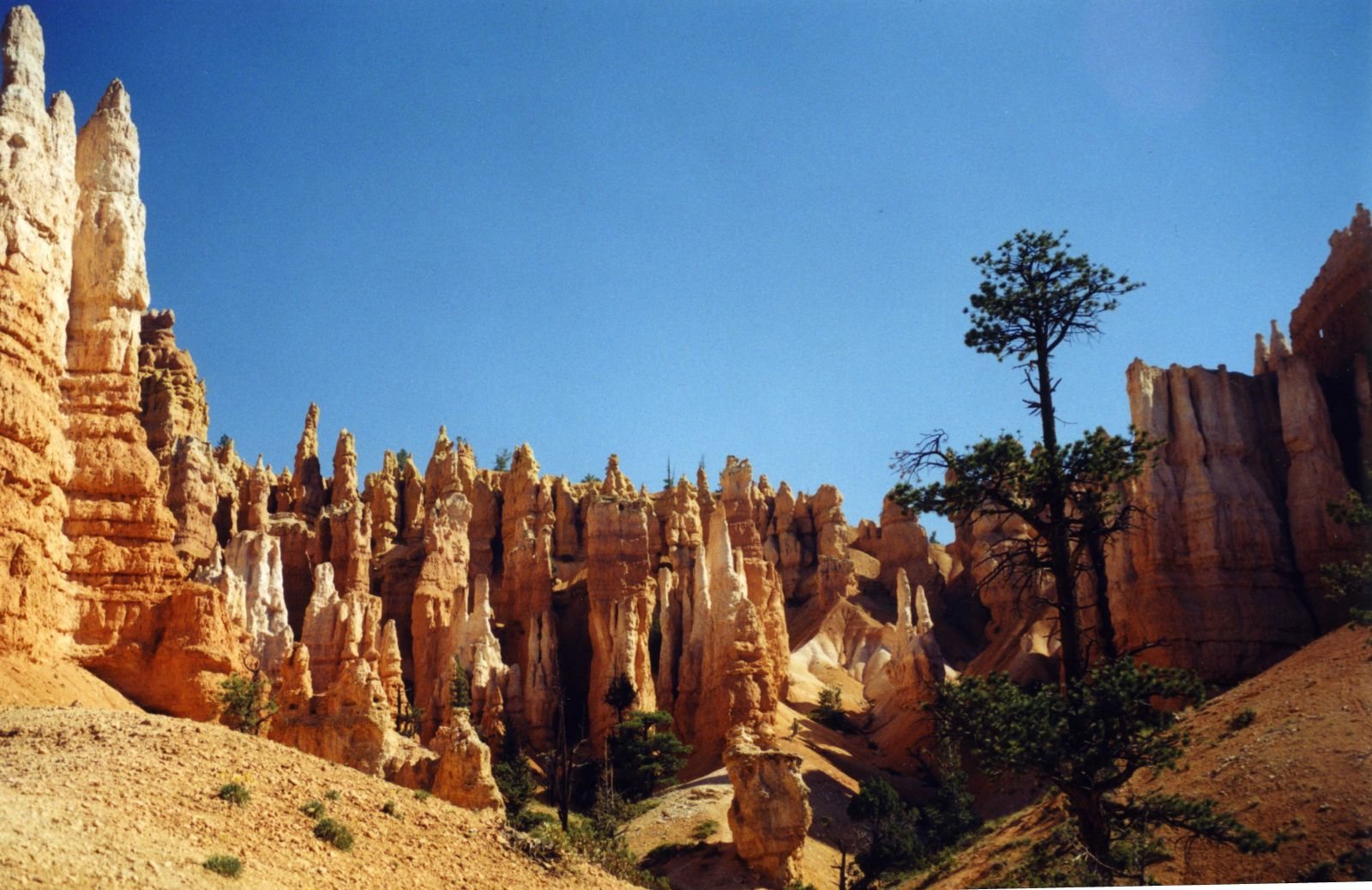 USA SW: Bryce Canyon, Peekaboo Trail, Branches only at the top, Walkopedia