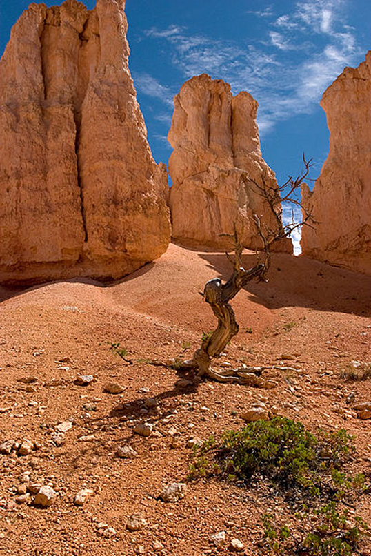 Surrounded by Hoodoos - Bryce Canyon National Park  - © wiki commones uer James Marvin Phelps