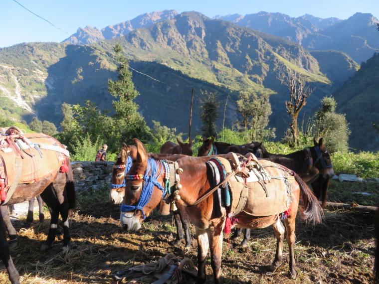 India NW: Uttarakhand/Garwhal, Nanda Devi Area, Mules, Curzon Trail, Walkopedia