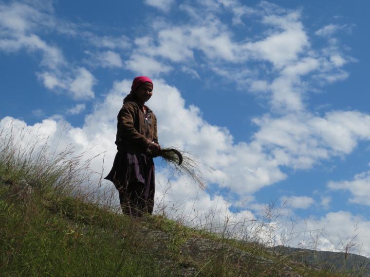 India NW: Uttarakhand/Garwhal, Kuari Pass (Curzon Trail) , Grasscutter in profile, Walkopedia