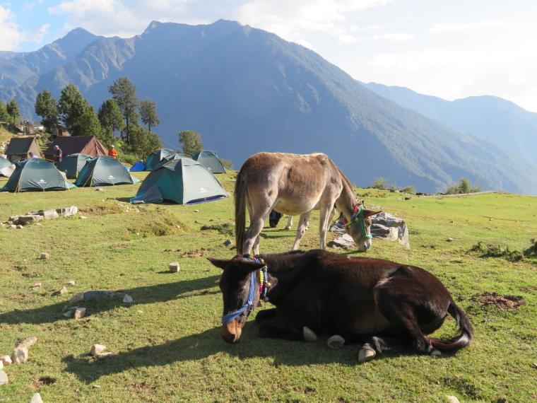 India NW: Uttarakhand/Garwhal, Kuari Pass (Curzon Trail) , Campsite, day 1, Walkopedia