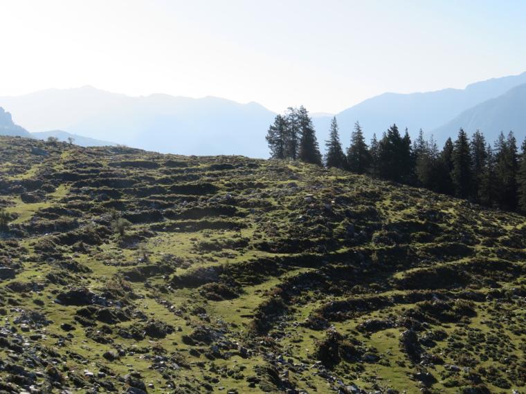 India NW: Uttarakhand/Garwhal, Kuari Pass (Curzon Trail) , Day 2, abandoned terracing, Walkopedia