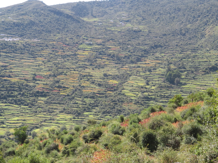 India NW: Uttarakhand/Garwhal, Kuari Pass (Curzon Trail) , Endless terraces near camp day 3, Walkopedia