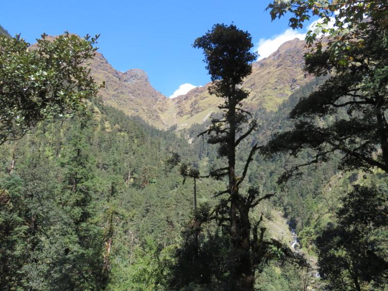 India NW: Uttarakhand/Garwhal, Kuari Pass (Curzon Trail) , Kuari Pass, Walkopedia