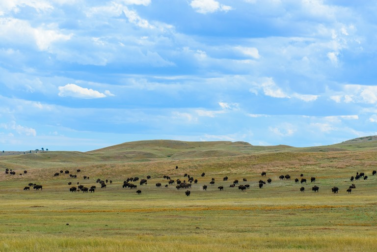 Black Hills and Grasslands, South Dakota: South Dakota Black Hills  - © Jerry and Pat Donaho flickr user