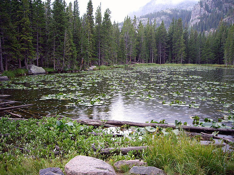 "Rocky Mountain NP: nymph lake - ©  flickr user The Mind""s Eye Photography"
